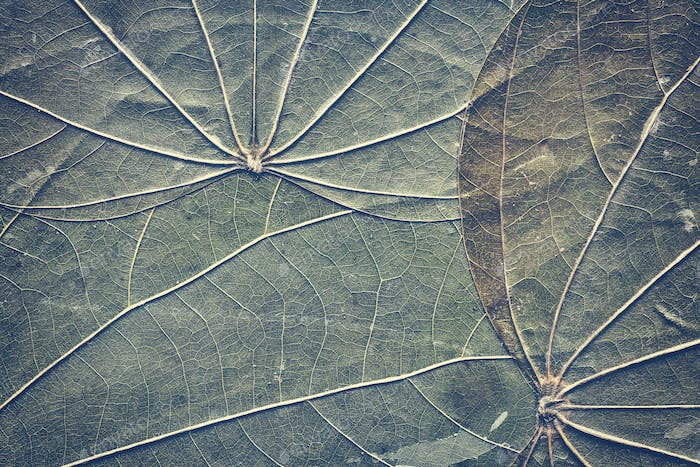 Extreme close up picture of old compressed leaves.