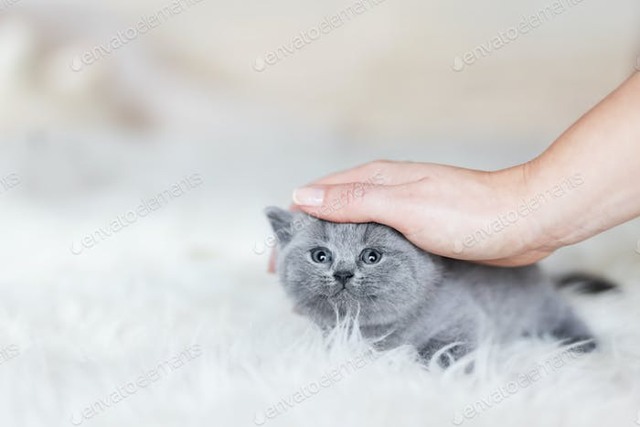 Woman's hand stroking young kitten.