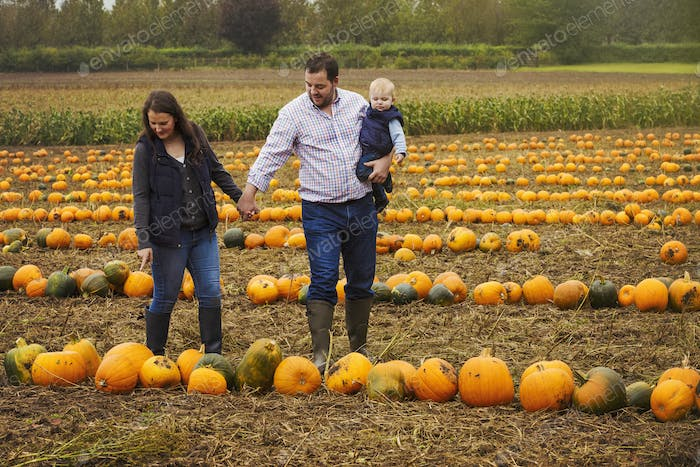 A family, two adults and a young baby among rows of bright yellow, green and orange pumpkins