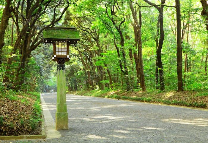 Footpath in Japanese garden