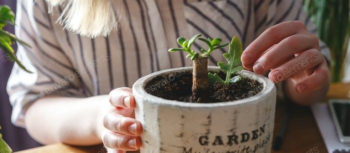 Gardening home. Garden home,Girl replanting green pasture in home garden