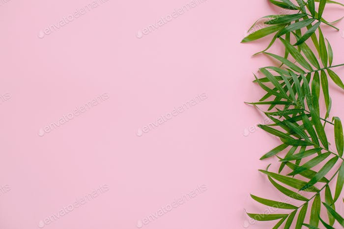 Fresh palm leaves border on pink background with space for text