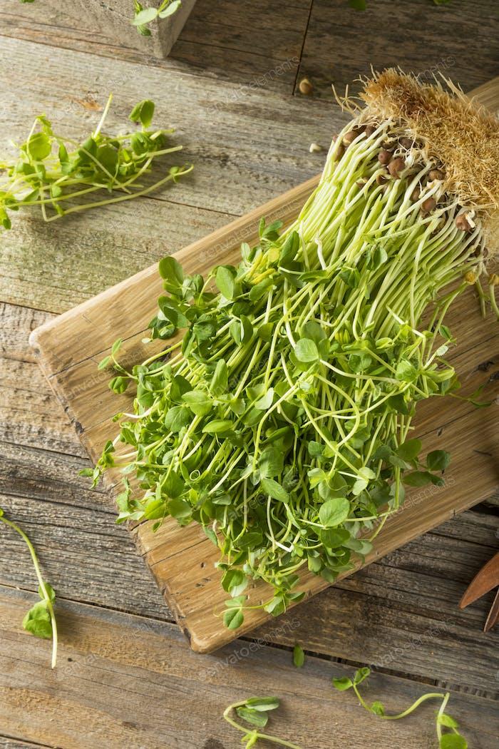 Organic Raw Green Pea Shoots
