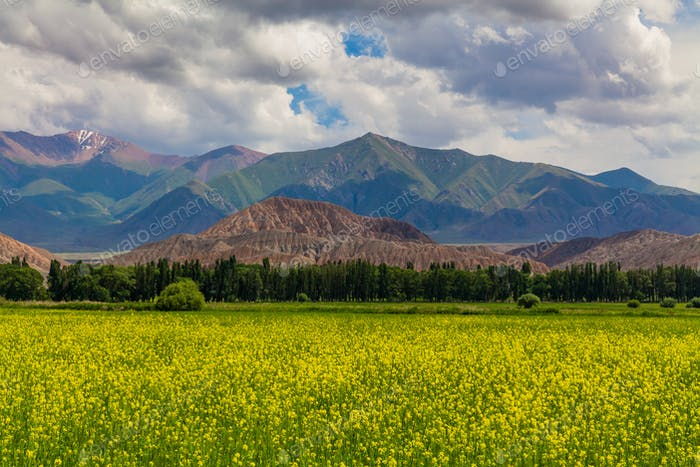 Blooming valley with green mountains. Kyrgyzstan