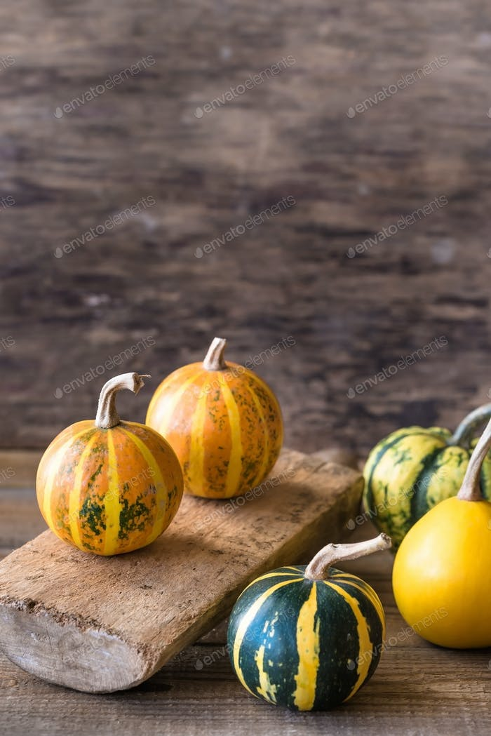 Variety of ornamental pumpkins