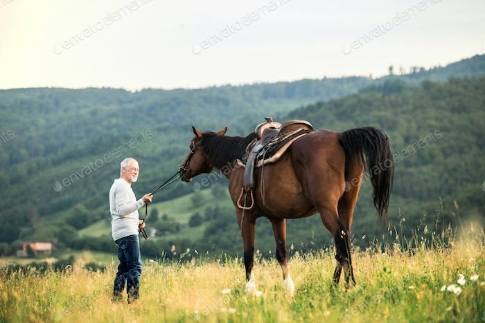 A senior man holding a horse by his lead on a pasture.
