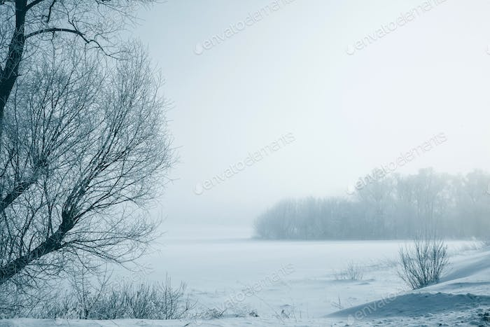 Winter, frosty landscape with white trees in a cold fog.