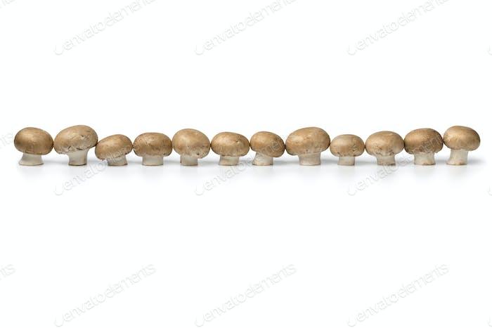 Row of fresh raw chestnut mushrooms