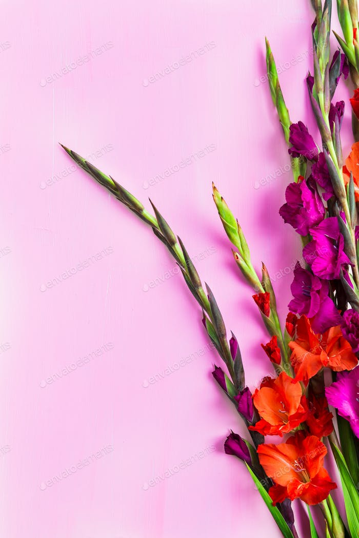 Bunch of beautiful gladiolus flowers