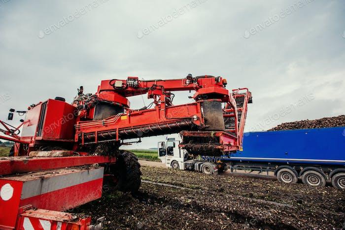 Truck and Excavator harvest off.