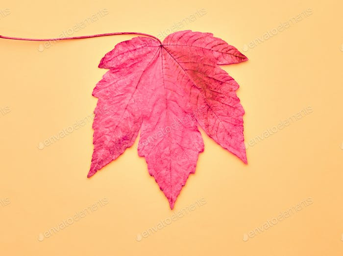 Autumn Art. Fall Fashion. Minimal. Maple Leaf