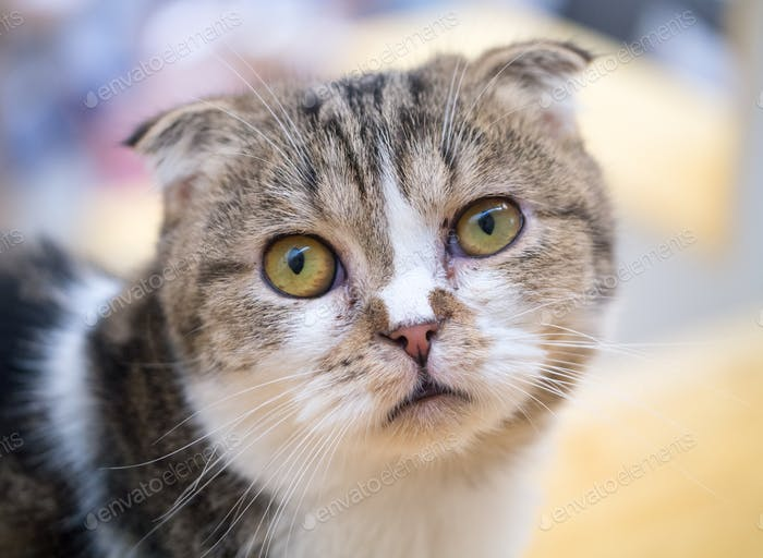 A wondering cat