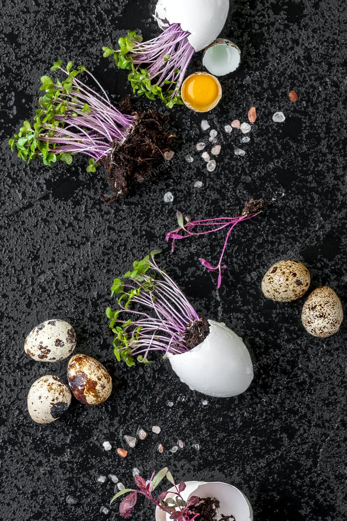Fresh watercress salad in eggshell and quail eggs on a wet black