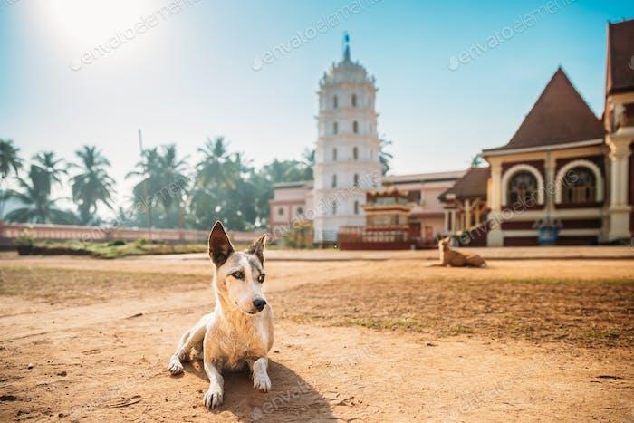 Kavlem, Phonda, Goa, Indien. Hund ruht in der Nähe von Shree Shantadurga Mandir, Kavlem Tempel. Berühmt