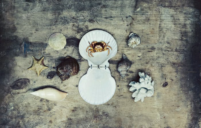 Sea shells on old wooden background