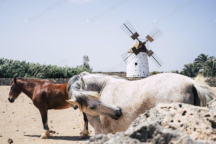 paar Pferde, die auf dem Land frei leben