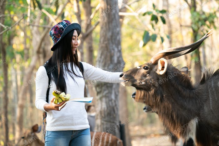 woman watching and feeding animal in zoo