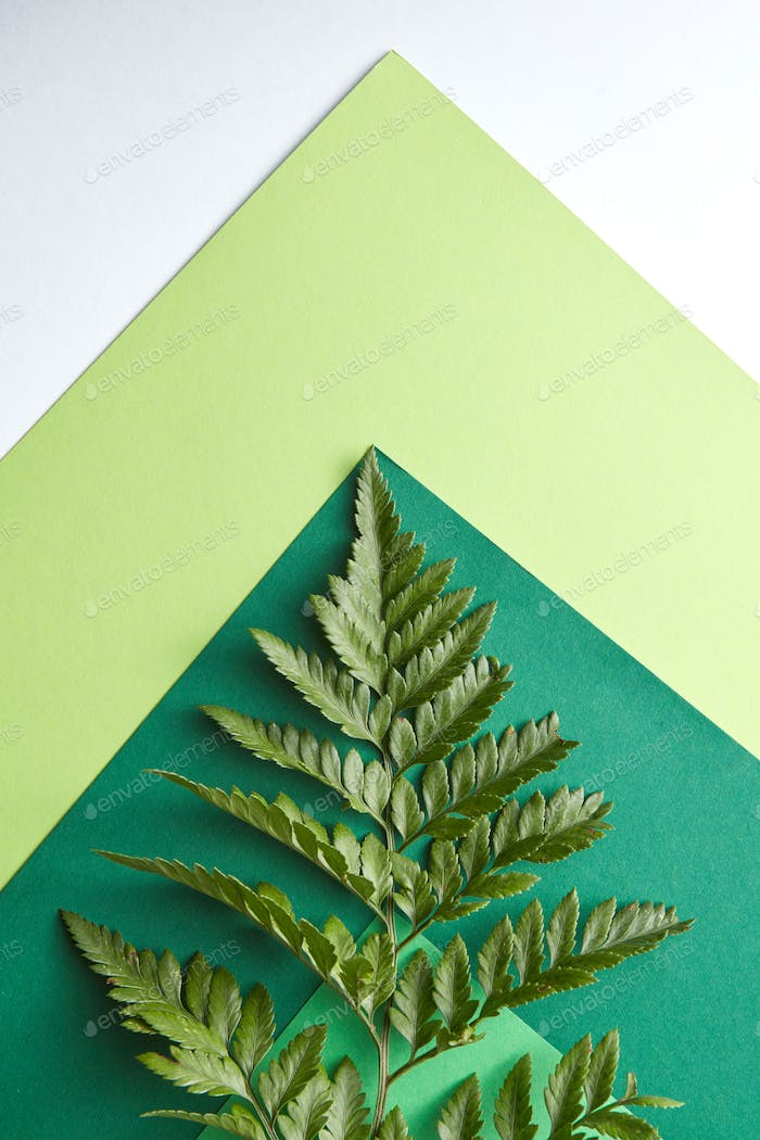 Fern leaf on a multi-colored green cardboard around a gray background with copy space. Natural