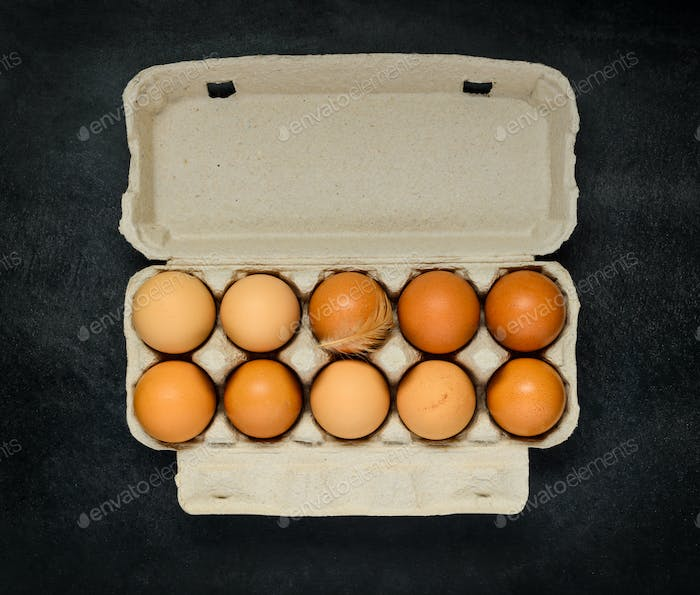 Chicken Eggs in Egg Carton Box