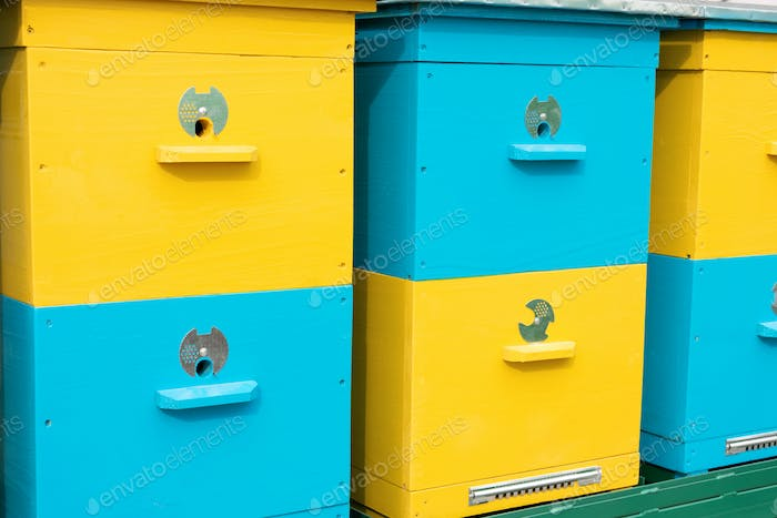 Colorful yellow and blue bee hives in a row in the apiary, Apiculture, Beekeeping, bee yard. Honey