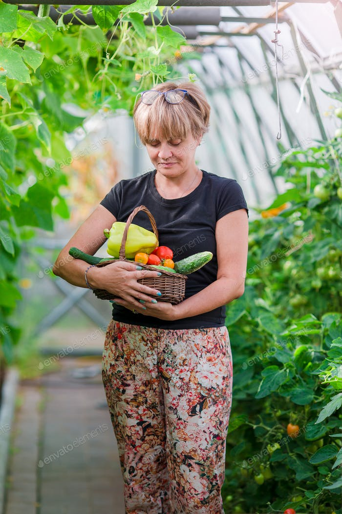 Woman with basket of greenery and vegetables in the greenhouse. Time to harvest