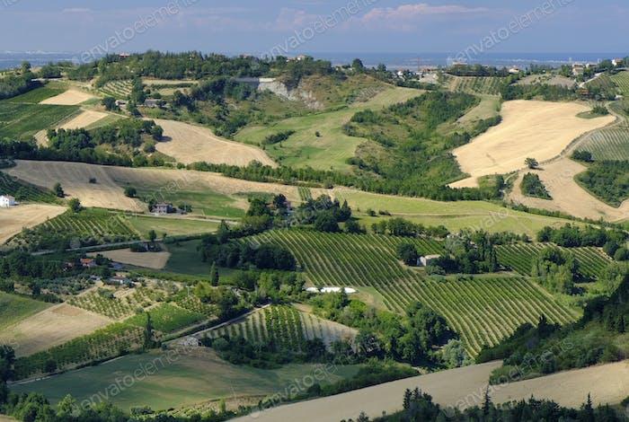 Landscape in Romagna at summer from Sogliano al Rubicone