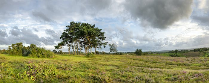 The New Forest Evening