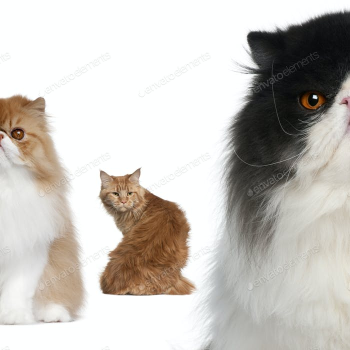 Portrait of group of cats in front of white background