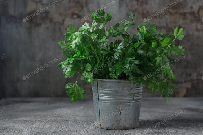 Bunch of parsley in a metal bowl. copy space