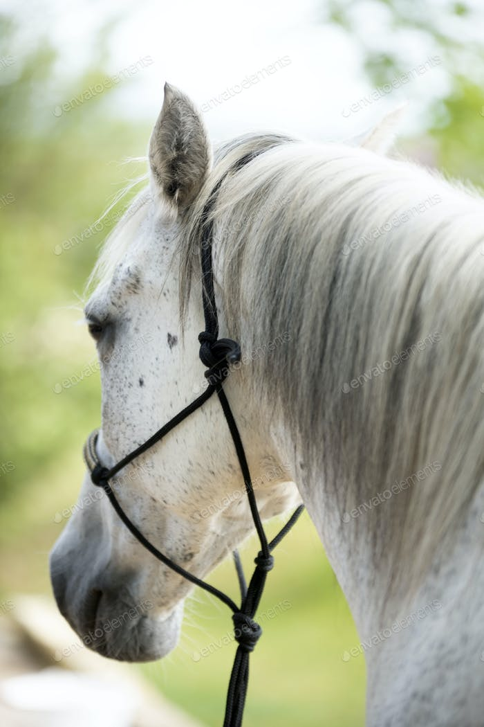 horse with ethological halter