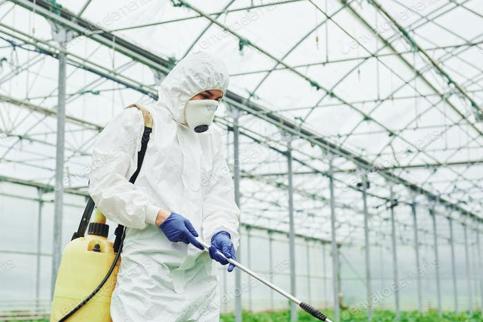 Young greenhouse female worker in full white protective uniform watering plants inside of hothouse
