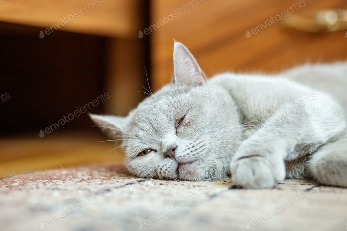 The cat is sleeping on the floor. The concept of pets