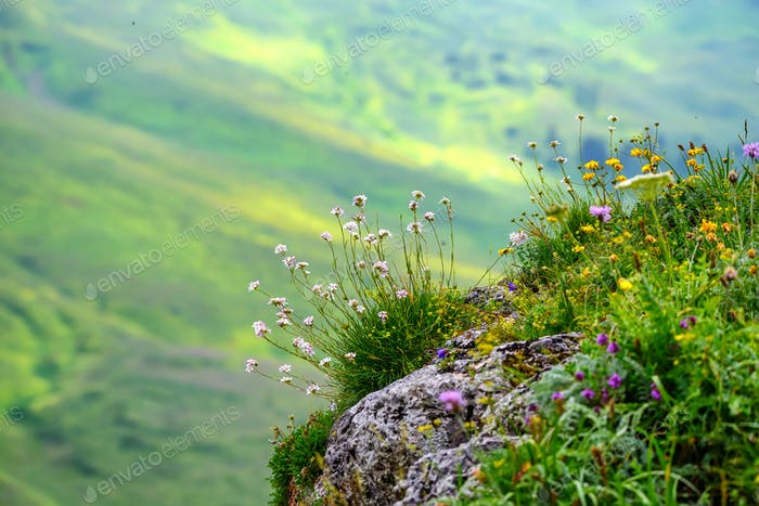 Scenic view of mountain meadow