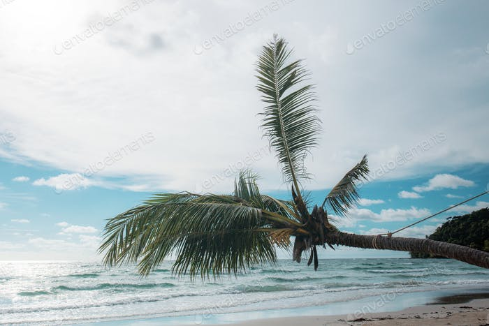 coconut tree at sea