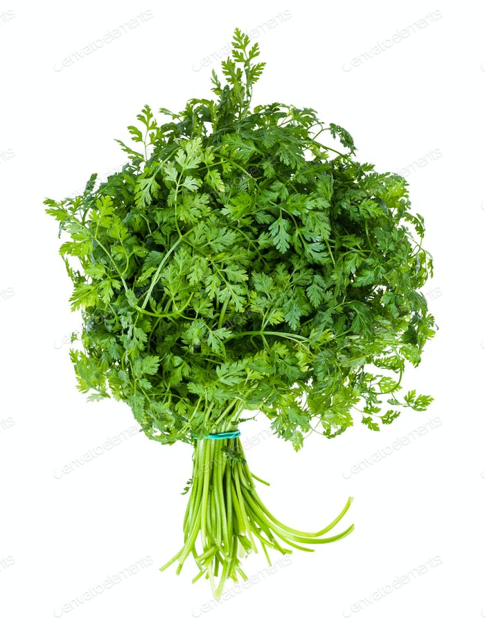 bunch of green Chervil herb isolated on white