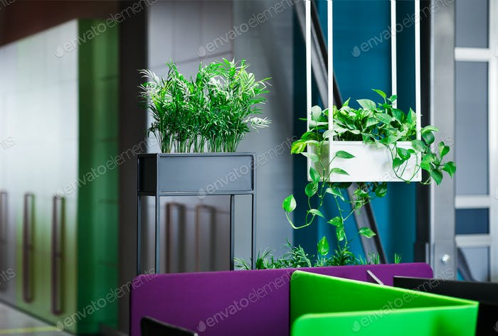 Relaxation area in modern office interior with green plants