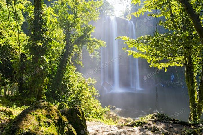 Misol Ha Waterfall Jungle Path