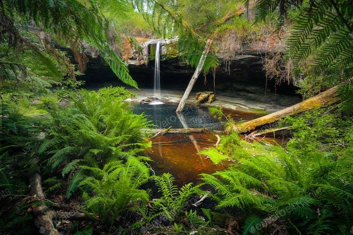 Fresh Falls