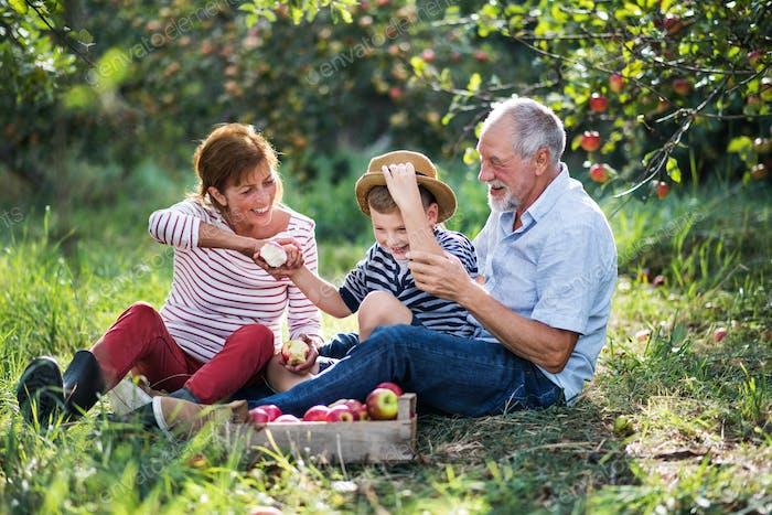 Ein älteres Paar mit kleinen Enkel in Apfelgarten essen Äpfel.