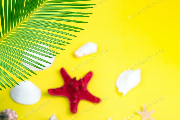 Tropical Background Palm Trees Branches