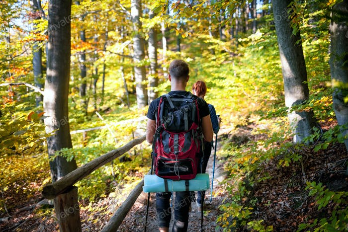 Trekking in the spring forest
