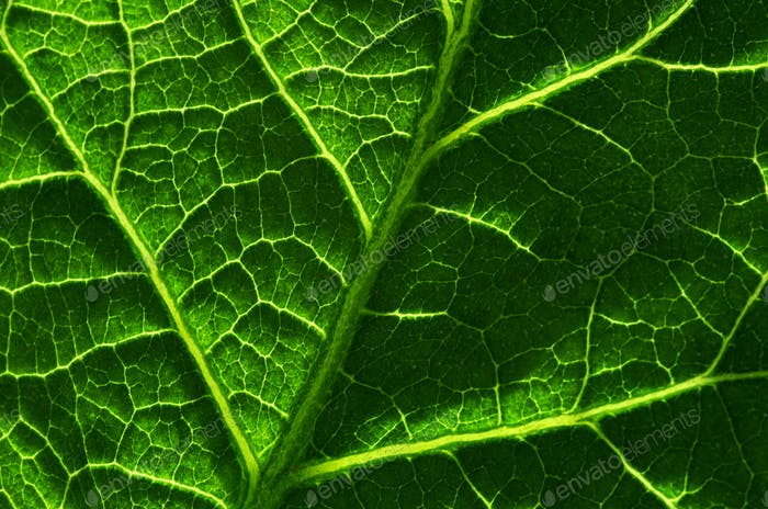 Background of the green leaf