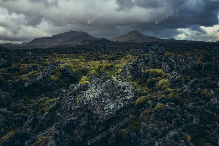 Old lava covered with foss  in Berserkjahraun, Iceland