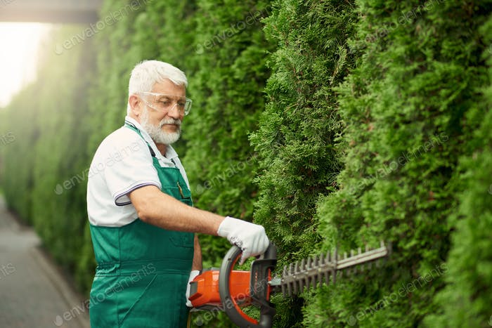 Man wearing ear and face protection cutting hedge