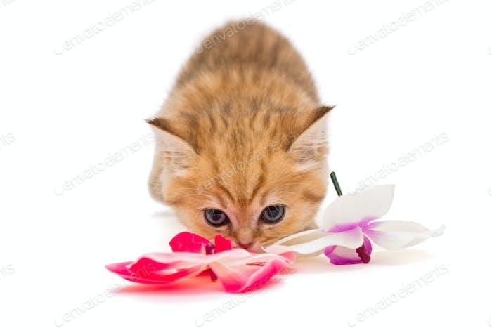 Kleine Kätzchen und eine Blume, isoliert auf weiß
