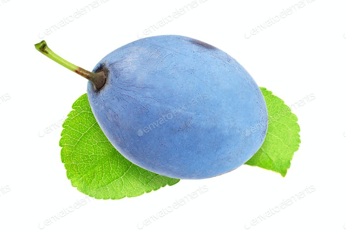 Blue plum isolated