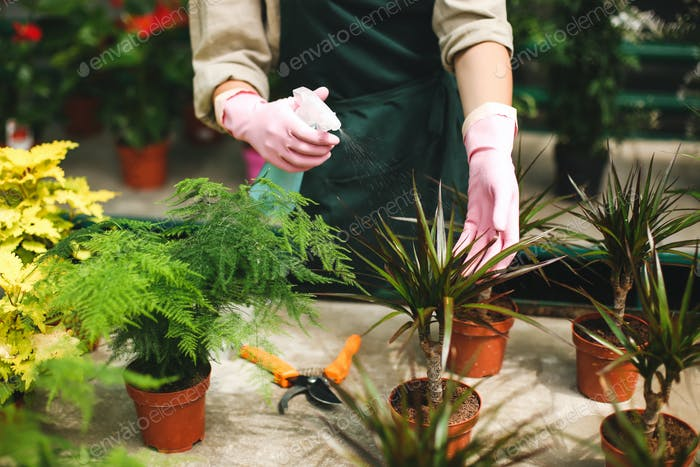 Close up photo of woman hands in pink gloves spraying flowers in pots while caring about them