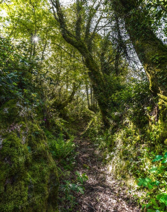 Ancient path on the Camino de Santiago