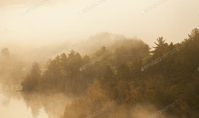 Trees in Morning Fog on Boundary Waters Lake in Minnesota