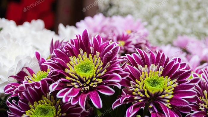Blumenstrauß von Chrysanthemen Blumen